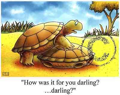 [PIC]Turtle_Sex[PIC]