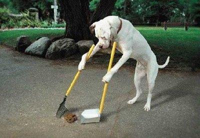 DogCleaningPoop-thumb-400×277