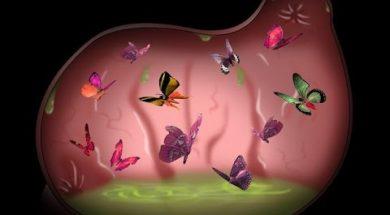 Butterfly Fallacy